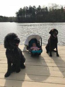 Fun in the Sun with Panda / Boone / Grey Kelly relaxing on the dock.
