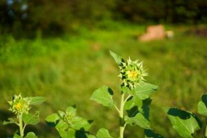 SeedingDreams-1